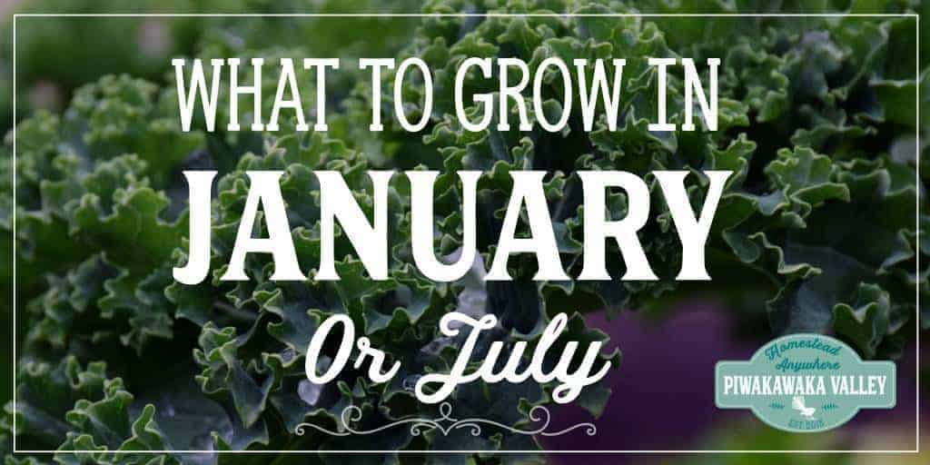 Not sure what to plant in your Winter garden this month? Here is a list of tasks and plants that are suitable for the month of January - or July in the Southern Hemisphere. #vegetablegarden #wintergarden #homesteading
