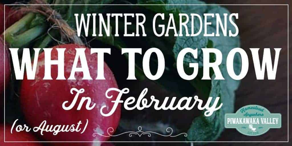 Knowing what to grow in your winter vegetable garden is tricky. Here is a list of plants in your USDA Zone that you can plant in February (or July) beginner gardening, growing food, urban garden, winter garden, vegetable garden, self sufficiency