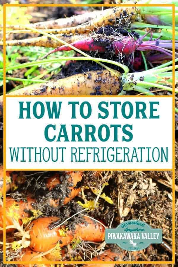 Have you got a bumper carrot harvest and need tips on storing your root vegetables over winter without the refrigerator? Here are several ways to store carrots, beets, turnips after harvest. #piwakawakavalley #storingtheharvest #foodpreservation #rootcellar #carrots #beets