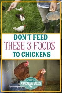 Can Chickens Eat Bread? 3 Things you Should NOT Feed your Chickens promo image