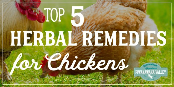 5 best herbs for keeping your backyard chickens healthy. #backyardchickens #chickens #chickencoop #healthyhens #homesteading #homestead #piwakawakavalley