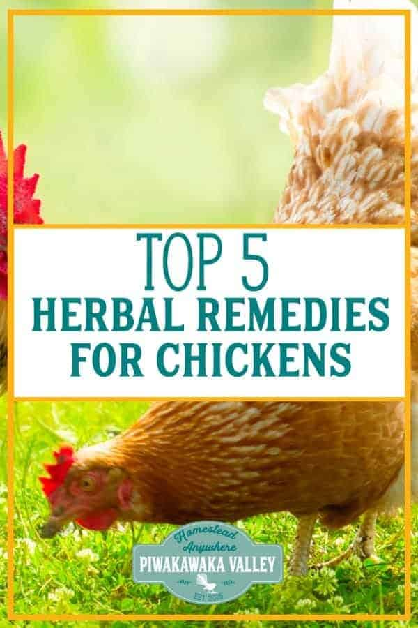 5 Herbal Medicines for Chicken Illnesses: Natural remedies for Poultry promo image