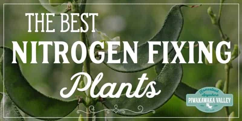 big list of nitrogen fixing plants for your garden #piwakawakavalley