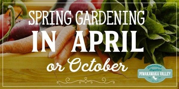 Here is what to plant in your spring garden in April in the northern hemisphere or October in the southern hemisphere, for USDA zones 1-10. #gardening #veggiegarden #vegetablegarden #homesteading #piwakawakavalley