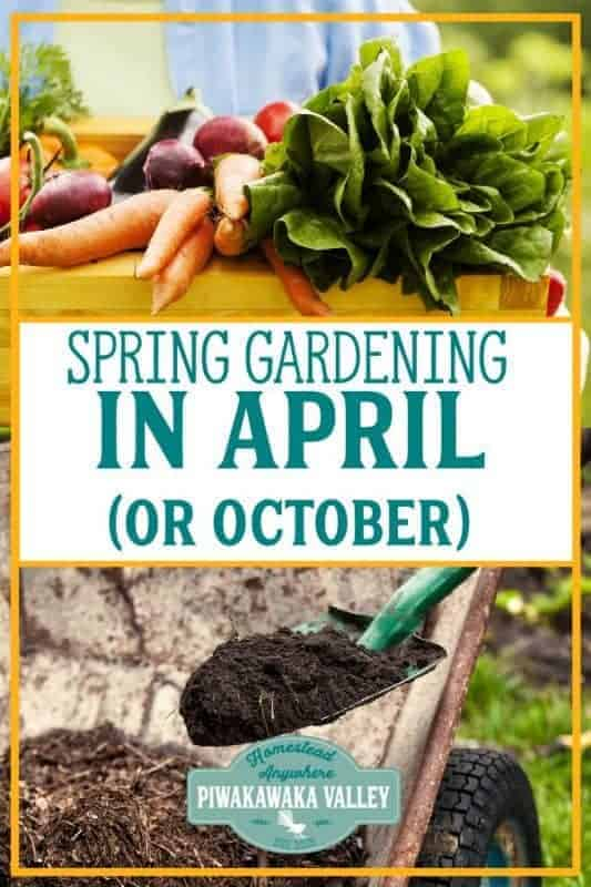 What to plant in your Spring Garden in April (or October) promo image