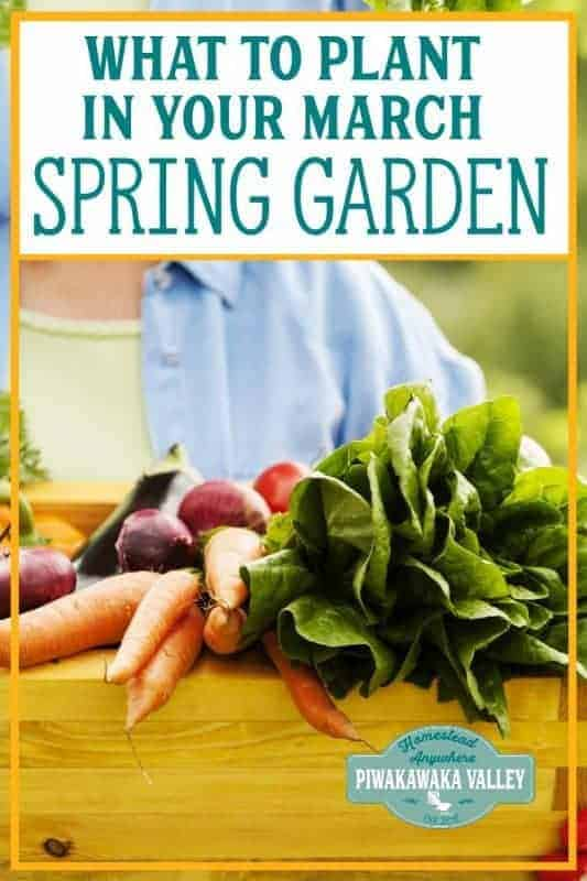 What to Plant in your Spring Garden in March (or September) promo image
