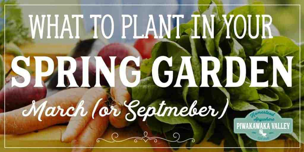 What to grow in your spring garden in march in the northern hemisphere or in september in the southern hemisphere #homesteading #piwakaeakavalley