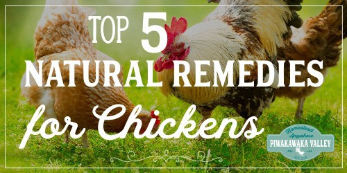 5 Natural Remedies for Sick Chickens