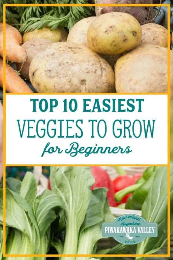 Are you a beginner gardener? Here are 10 of the easiest vegetables for beginners to grow in their garden. #vegetablegarden #Beginnergardening #piwakawakavalley