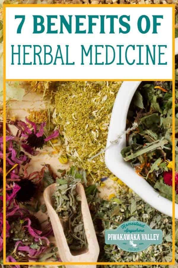 Herbal medicine is the foundation of almost all of our modern medicines, and when practised wisely by a skilled practitioner, it can be just as effective, if not more so.  There are many benefits of herbal medicine, here we will explore the top 7 benefits of using home remedies, as well as some of the risks associated with using traditional herbal medicines. #naturalremedies #herbalmedicine #piwakawakavalley