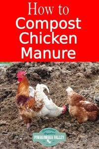 How to compost chicken manure properly so that you don't loose the nutrients, end up with a stinky slimy mess, or kill your garden. Permaculture principles in action #piwakawakavalley