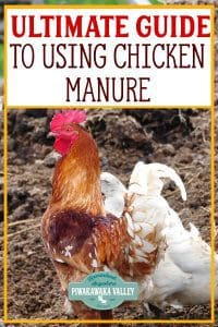 Chicken manure is a great resource when you know what to do with it. A chicken can produce an amazing amount of manure in a year! It can be great for the garden if you treat it properly first #piwakawakavalley