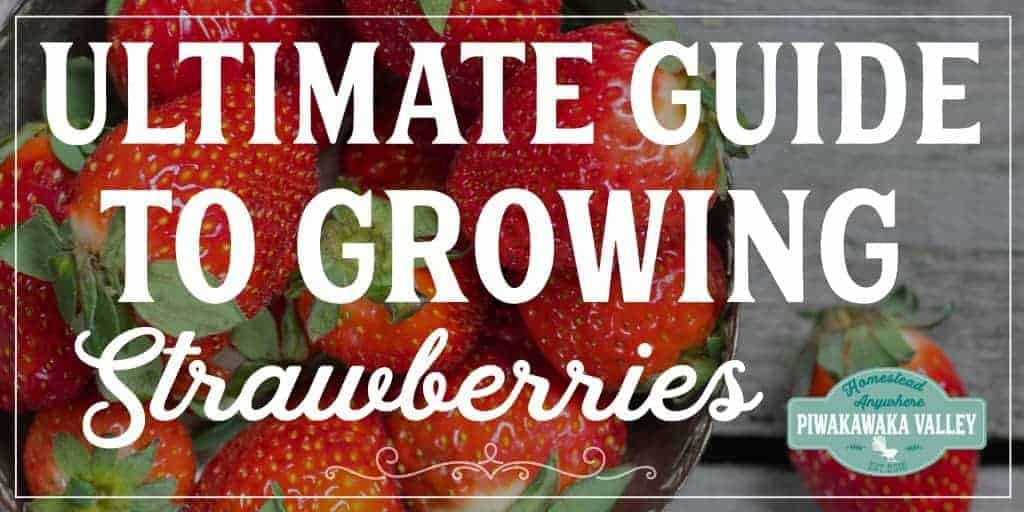 The Ultimate guide to Growing Strawberries: How to grow strawberries anywhere promo image