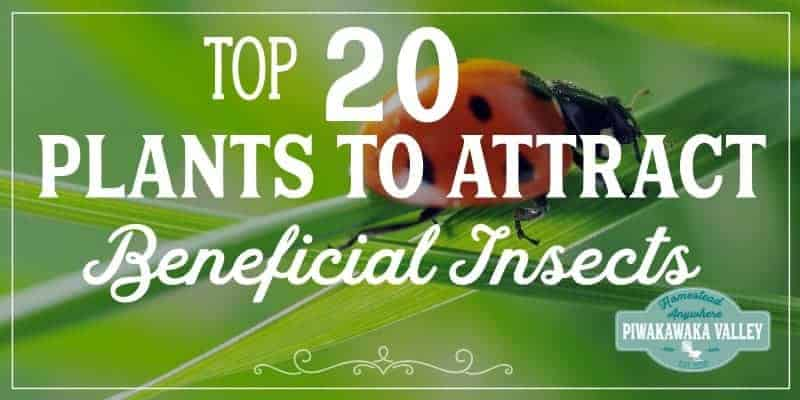 20 Plants to Encourage Beneficial Insects in your Garden promo image