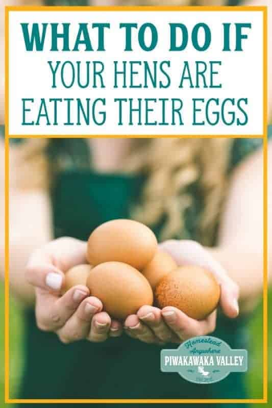How to Stop Chickens Eating their Eggs: Preventing Hens from Pecking Eggs promo image