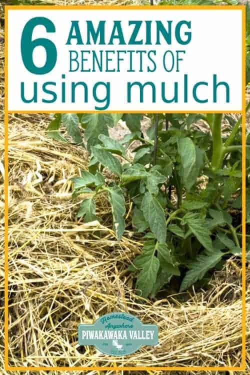 What is the best mulch for vegetable gardens? Find out everything you need to know about mulching your vegetable garden #piwakawakavalley
