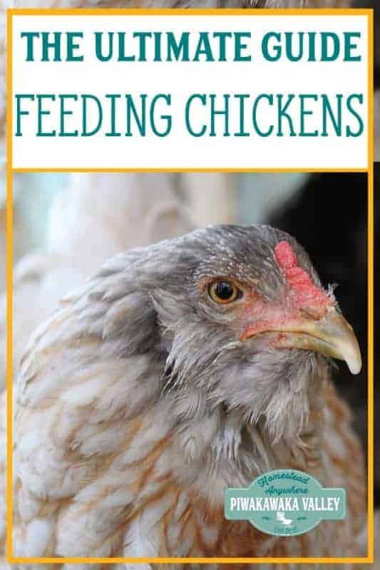 Ultimate Guide to Feeding Chickens: What can chickens eat list promo image