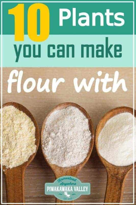 When the SHTF and you need to ditch the commercial grains, will you have a supply of flour to make breads at your house? Here are 10 gluten free flours that you can grow and mill at home in to delicious and nutritious flours for baking and cooking #piwakawakavalley