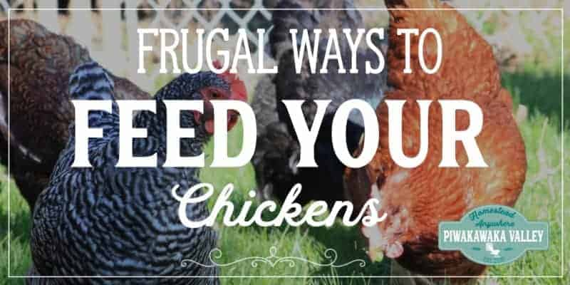 Frugal chicken feed ideas Keeping chickens in your backyard can be expensive. Check out these tips for keeping the cost down raising hens for eggs #piwakawakavalley