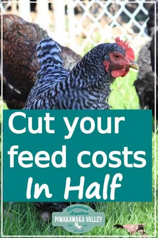 Cut your chicken feed bill in half! Keeping chickens in your backyard can be expensive. Check out these tips for keeping the cost down raising hens for eggs #piwakawakavalley