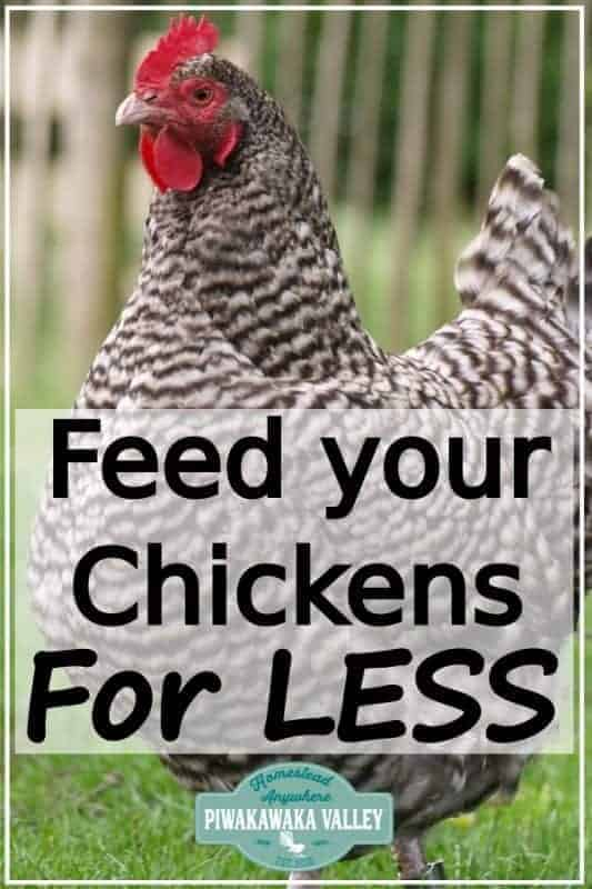 Feed your chickens for less today! Keeping chickens in your backyard can be expensive. Check out these tips for keeping the cost down raising hens for eggs #piwakawakavalley