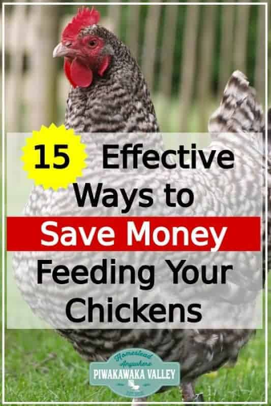 Keeping chickens in your backyard can be expensive. Check out these tips for keeping the cost down raising hens for eggs #piwakawakavalley