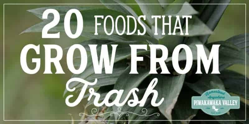 Grow food from scraps that you would usually throw away with these handy kitchen hacks. Easy to grow foods that you can try to grow at home #piwakawakavalley