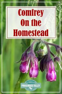 Are you thinking about growing comfrey in your herb garden this season? You should! Here is everything you need to know about growing and using comfrey around the homestead and in herbal remedies #piwakawakavalley