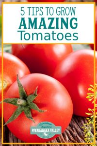 Growing tomatoes isn't the easiest. Here are some useful, practical tips for improving your tomato harvest this growing season. #piwakawakavalley