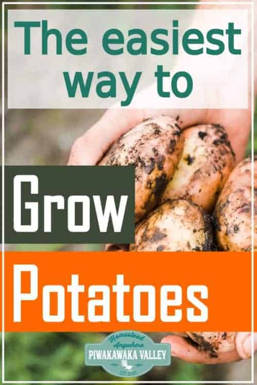 Learn these great gardening tips, from a seasoned gardener. Growing potatoes using the back to Eden method of gardening is by far the easiest way to get a good crop of potatoes for beginner gardeners. Follow this step by step guide to growing a good crop of spuds in your vegetable garden this season