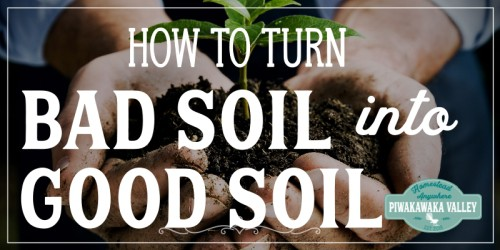 How to turn bad soil into good soil. Preparing the soil before planting is a key part of growing a garden. Restoring soil is possible when you follow the right steps to improve the soil in your vegetable garden. #piwakawakavalley