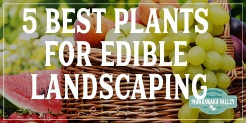 5 Best Plants for Edible Backyard Landscaping promo image