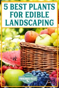Edible landscaping, when designed well, also saves time on yard work and helps to give you control of your food supply.It is also a good eco-friendly way of eating, because growing your own fruits enables you to cut down on the use of fuel and all the nasties that come with commercial agriculture.