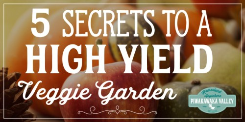 5 Secrets to a High Yield Vegetable Garden 1