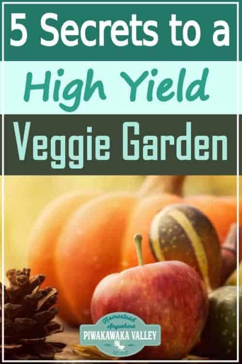 5 Secrets to a High Yield Vegetable Garden 1