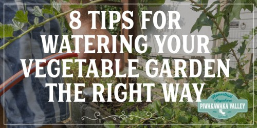 8 Tips for Watering your Vegetable Garden the Right Way promo image