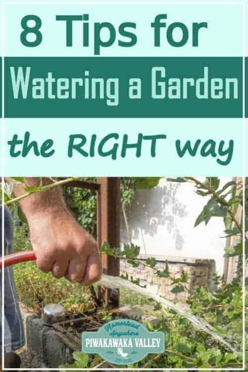 8 Tips for Watering your Vegetable Garden the Right Way