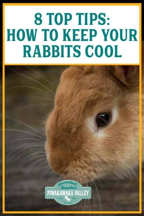 8 Top Tips To Keep Rabbits Cool This Summer - if you keep rabbits for meat or as pets, you need to be able to keep them cool over the Summer. Use these rabbit care tips to keep your bunnies cool and healthy when the heat sets in #piwakawakavalley