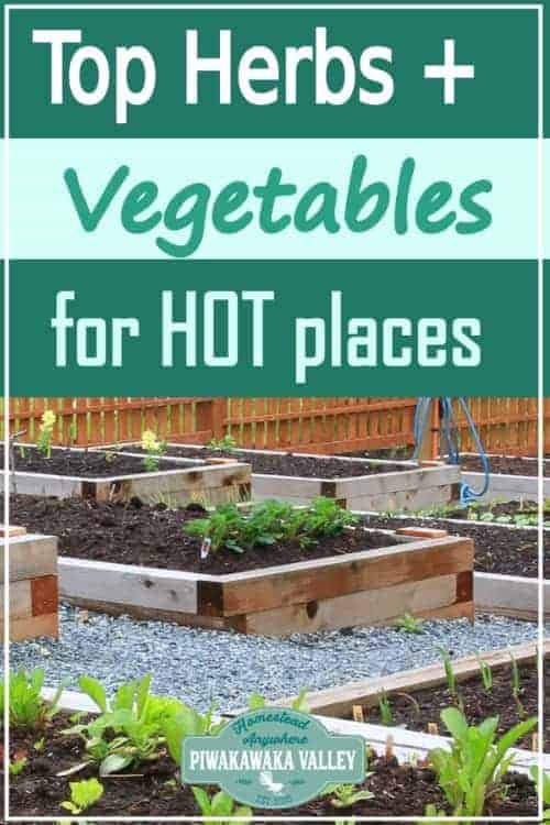 If you live in a hot climate but still want to grow your own vegetables and herbs, don't despair. There are plenty of crops that you can raise and enjoy even if you get super hot in the Summer. Here are some of our top recommendations of plants that can continue to thrive and produce even in hot and humid temperatures. #piwakawakavalley
