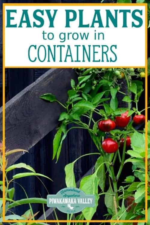 Growing vegetables in containers is a very efficient and convenient way to enjoy both gardening and fresh produce from right outside your kitchen. The following are some of the best vegetables to grow in containers and pots. #Piwakawakavally