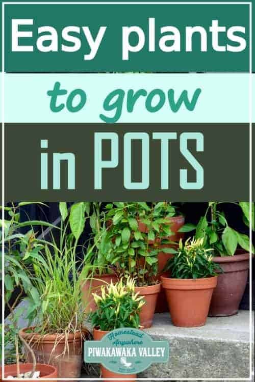 Best Vegetables To Grow In Containers And Pots promo image