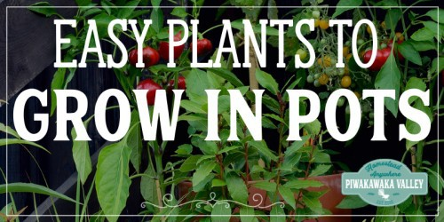 Growing vegetables in containers is a very efficient and convenient way to enjoy both gardening and fresh produce from right outside your kitchen. The following are some of the best vegetables to grow in containers and pots.