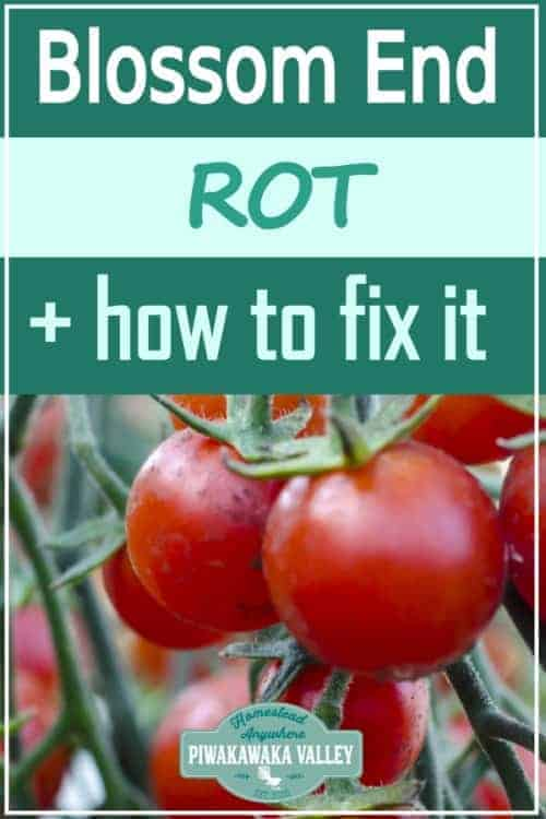 What is Blossom End Rot and How Can you Fix it? promo image