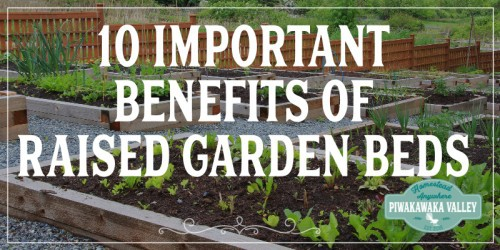 The Important Benefits Of Raised Garden Beds promo image