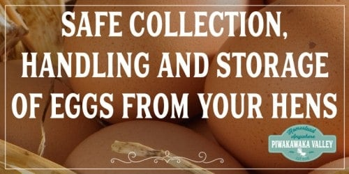 Safe Collection, Handling And Storage Of Eggs From Your Hens. Do you keep backyard chickens? Are you keeping your eggs safe from disease? Follow these tips for your families health #piwakawakavalley