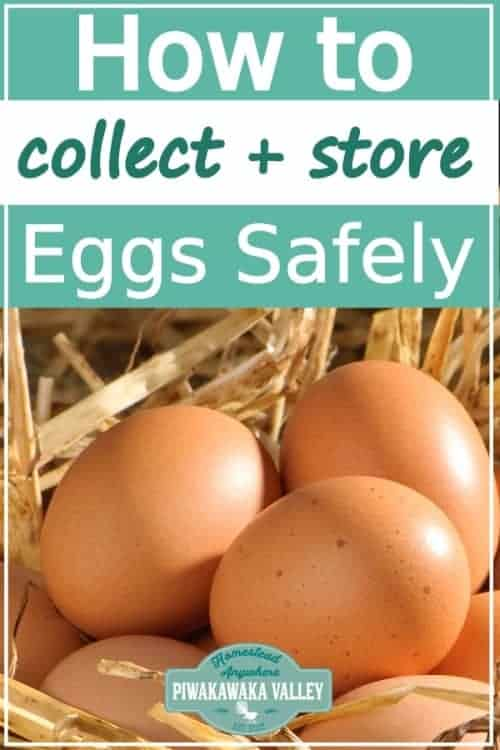 Safe Collection, Handling And Storage Of Fresh Eggs From Your Chickens promo image