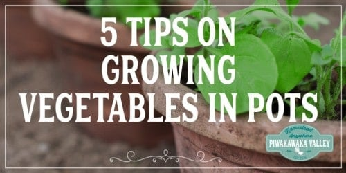 Tips On Growing Vegetables In Pots 3