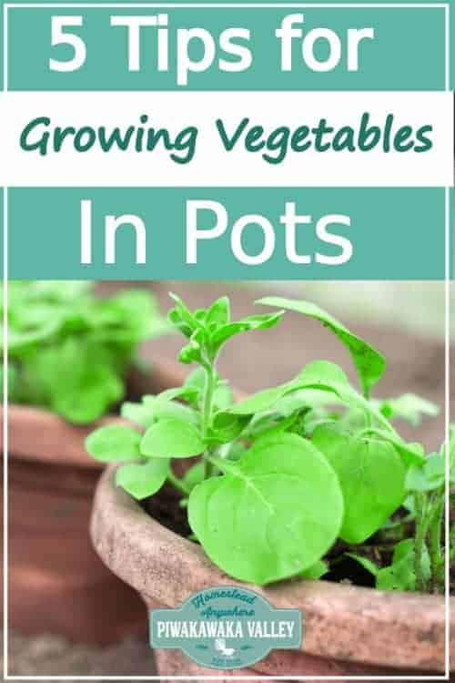 Container Gardening: Tips On Growing Vegetables In Pots promo image