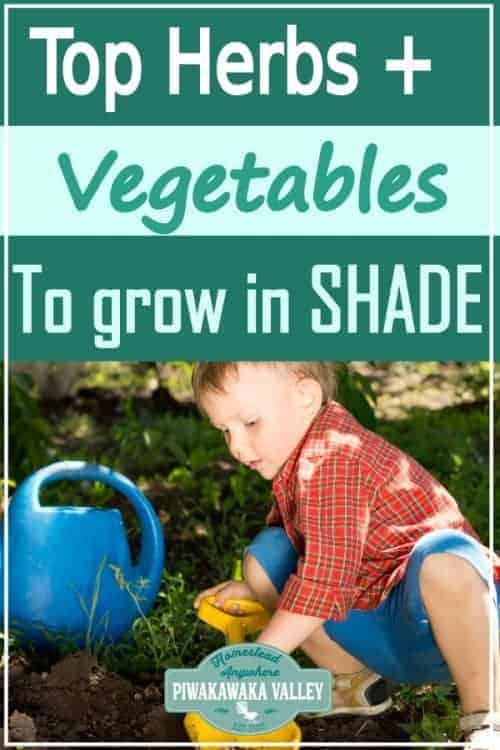 Top Herbs And Vegetables That Grow In The Shade promo image
