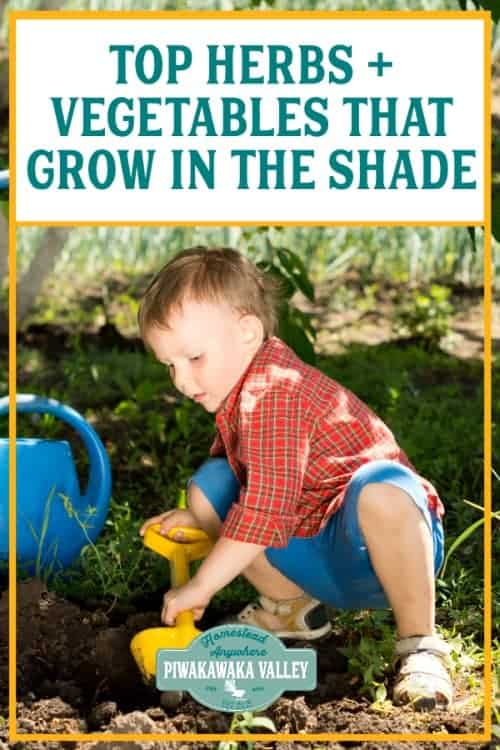 If your garden space is shadier than you want it to be, you don't need to give up on having a vegetable garden. There are many vegetables and herbs that can grow in partial shade - and even thrive in it!If you are growing a garden in your backyard that is shady and need plants that will do well, we have you covered.Partial shade means an area that is exposed to 3 to 6 hours of sun per day.